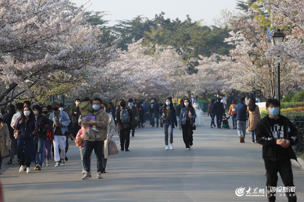 1、中山公园的樱花大道.jpg